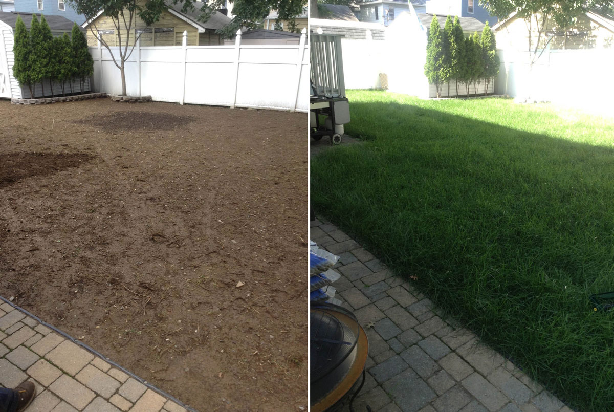 New Sod in Backyard - Before & After