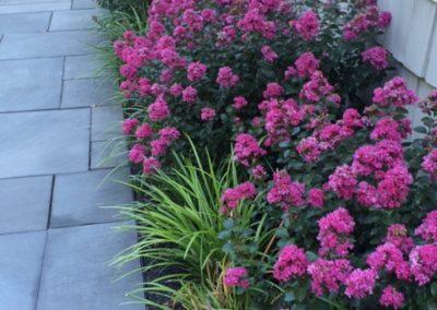 Colorful patio plantings-IMG_0048